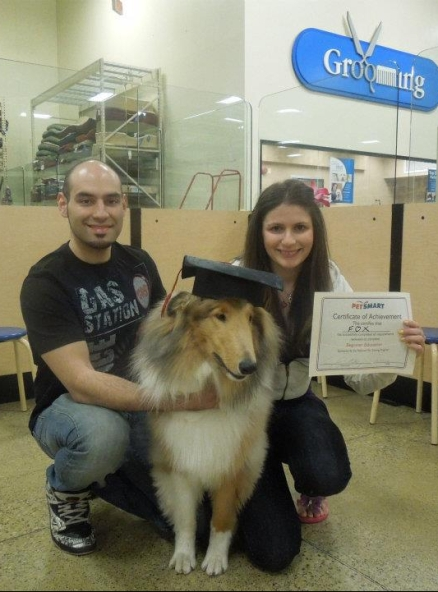 Rough Collie graduation