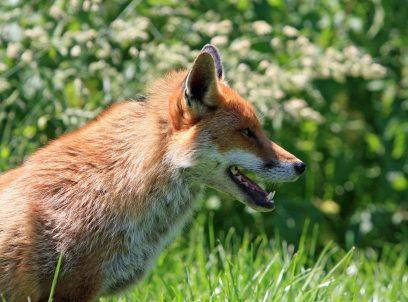 animal-animal-photography-blur-59842