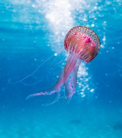 animal-aquatic-biology-1076758