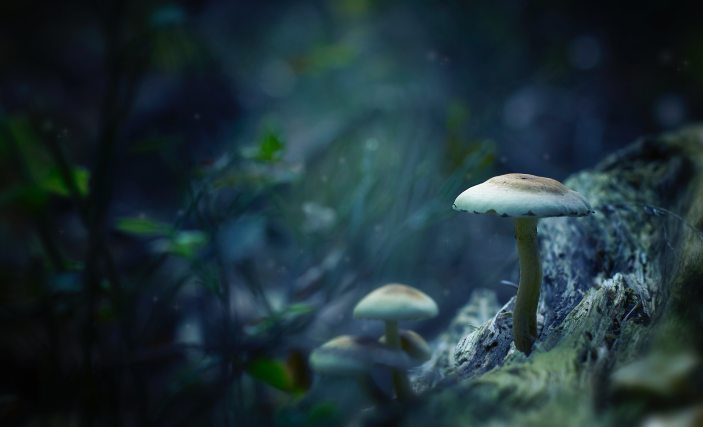 blur-bokeh-color-733116